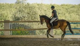 Neil-Bigwood-Commercial-Hacienda-Horses-01