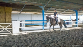 Neil-Bigwood-Commercial-Hacienda-Horses-03