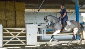 Neil-Bigwood-Commercial-Hacienda-Horses-04