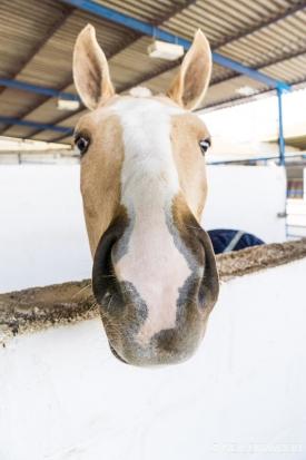 Neil-Bigwood-Commercial-Hacienda-Horses-05