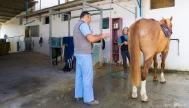 Neil-Bigwood-Commercial-Hacienda-Horses-07