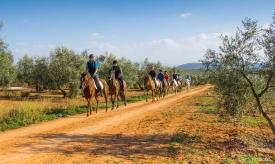 Neil-Bigwood-Commercial-Hacienda-Horses-15