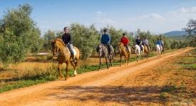 Neil-Bigwood-Commercial-Hacienda-Horses-16