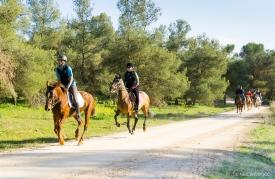 Neil-Bigwood-Commercial-Hacienda-Horses-17