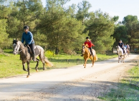 Neil-Bigwood-Commercial-Hacienda-Horses-18