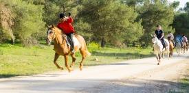 Neil-Bigwood-Commercial-Hacienda-Horses-19