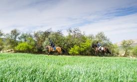 Neil-Bigwood-Commercial-Hacienda-Horses-21