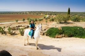 Neil-Bigwood-Commercial-Hacienda-Horses-30