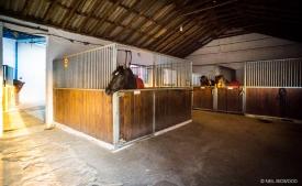 Neil-Bigwood-Commercial-Hacienda-Horses-46
