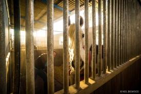 Neil-Bigwood-Commercial-Hacienda-Horses-50