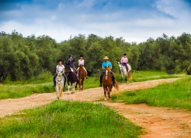 Neil-Bigwood-Commercial-Hacienda-Horses-62