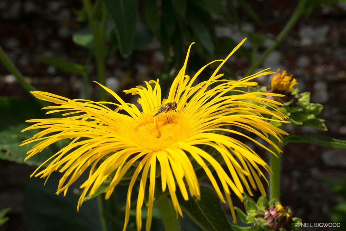 Neil-Bigwood-Flowers-10