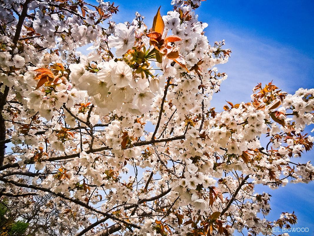 Neil-Bigwood-Flowers-16