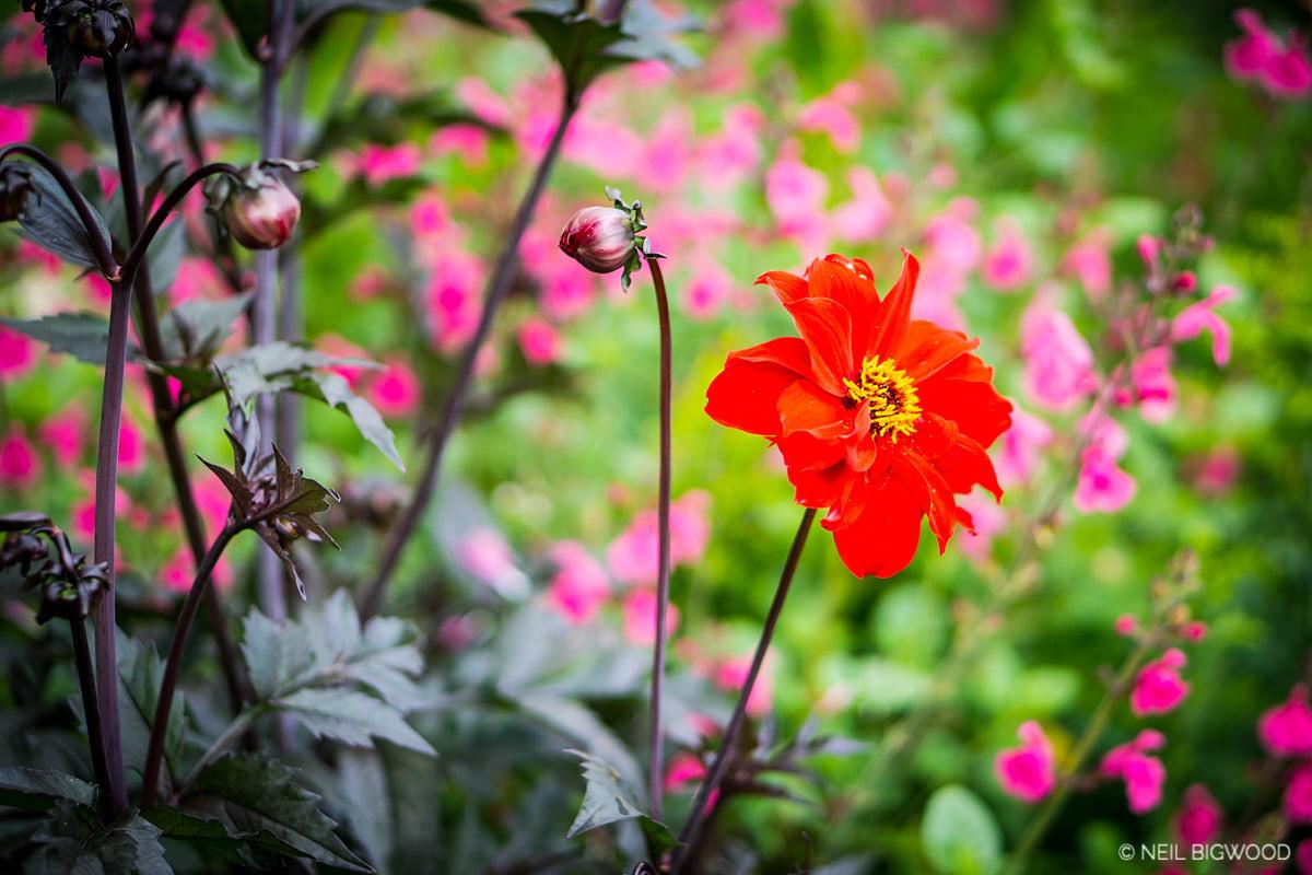 Neil-Bigwood-Flowers-20