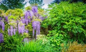 Neil-Bigwood-Flowers-11