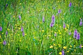 Neil-Bigwood-Flowers-15