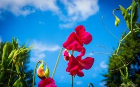 Neil-Bigwood-Flowers-17