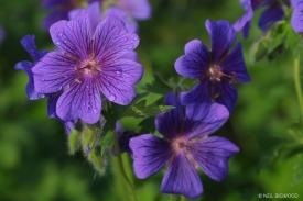 Neil-Bigwood-Flowers-21