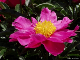 Neil-Bigwood-Flowers-22