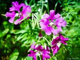 Neil-Bigwood-Flowers-24