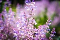 Neil-Bigwood-Flowers-03