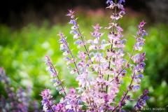 Neil-Bigwood-Flowers-04
