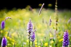 Neil-Bigwood-Flowers-12