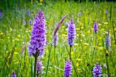 Neil-Bigwood-Flowers-13