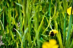 Neil-Bigwood-Flowers-14