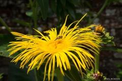 Neil-Bigwood-Flowers-18