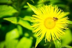 Neil-Bigwood-Flowers-19