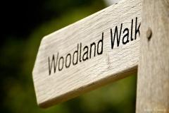 Neil-Bigwood-Monkton-Wyld-Camping-16