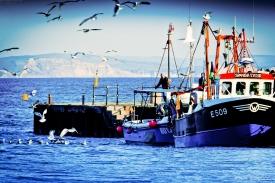 Neil-Bigwood-Lyme-Regis-Harbour-07