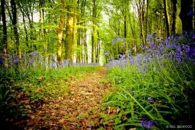 Neil-Bigwood-Landscapes-11
